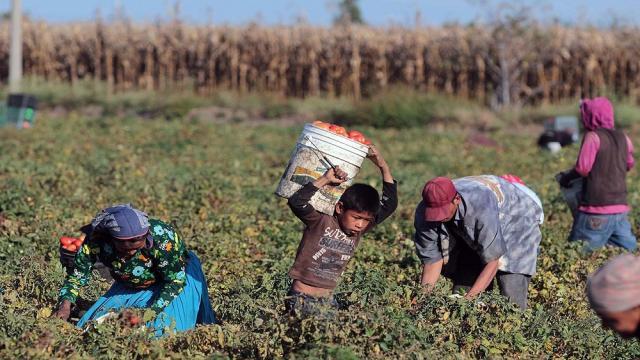 Nuestros niños y la agricultura en la escuela
