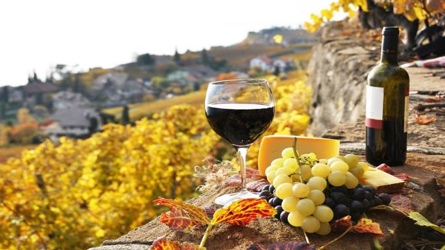 Perspectivas de crecimiento en el sector vitivinícola italiano