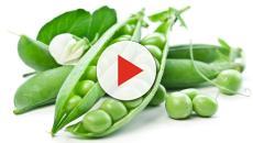 Los mejores alimentos ricos en fibra para la salud humana