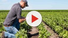 Optim establece una 'alianza agrícola inteligente'