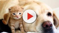 Animales: Remedios caseros para nuestras mascotas