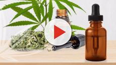 Video: Aceite de cannabis, la nueva tendencia en salud y belleza