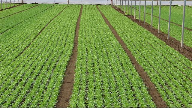 Preparación del semillero agrícola