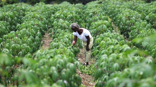 La evolución del asesoramiento agrícola