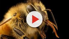 Las abejas ayudan en muchos aspectos a la naturaleza: ¡Salvémoslas!