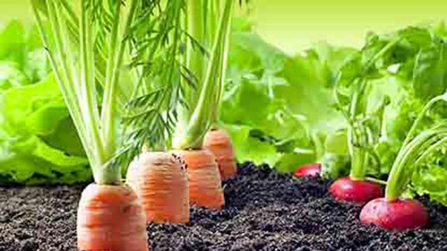 ¡Tener pequeñas cosechas en casa puede ayudar mucho a la economía familiar!