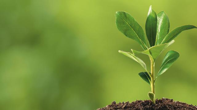 ¡Una planta dentro de casa es mucho más importante de lo que te imaginas!
