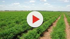 ¿Cómo se podría definir la agricultura?