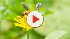 Los científicos confirman la dramática matanza de insectos