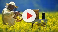 Cómo construir anidadores efectivos para las abejas silvestres