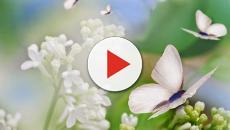 ¿Dónde se quedan realmente las mariposas en invierno?