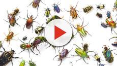 El descenso en la población de insectos podría ser una advertencia