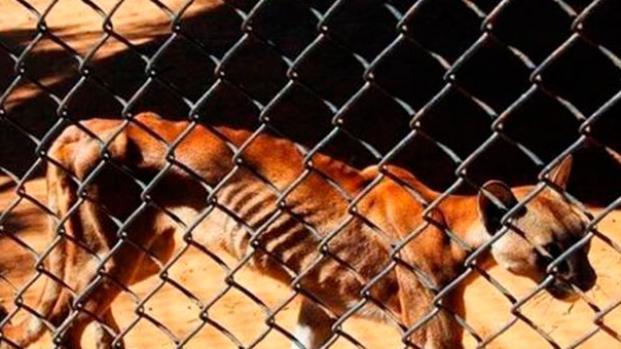 El drama de animales que mueren de hambruna en los zoológicos venezolanos