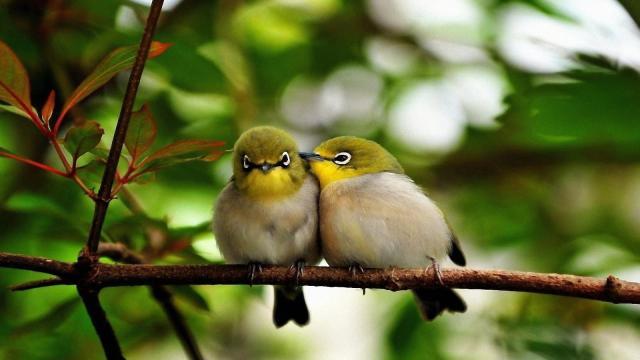 ¡Gracias a 136.000 amigos de pájaros!