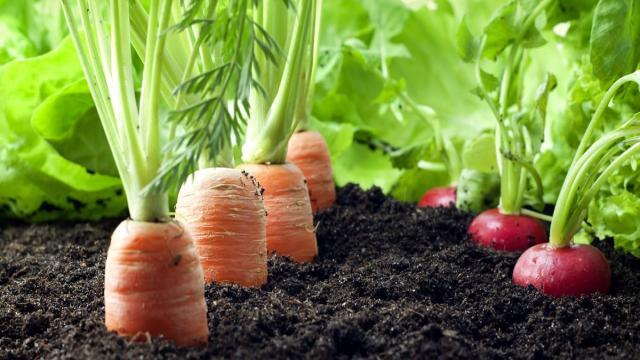 Los desafíos de la agricultura orgánica para 2018