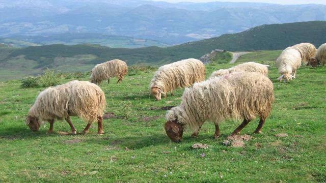 El pastoreo extensivo aumenta la biodiversidad