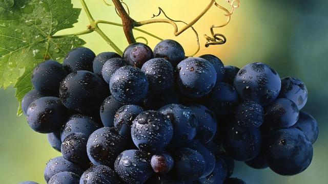 Consumir uvas para prevenir el Alzheimer