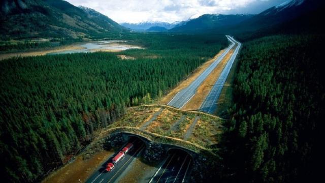 El primer puente ecológico – carretera