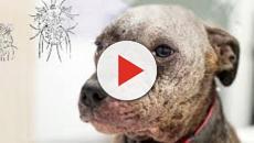 VÍDEO: Zoonosis: un problema global!