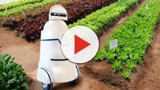 Robots en el campo: ¿el futuro de la agricultura de la UE?
