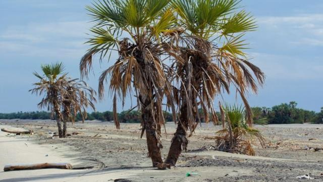 Interesting facts about palm trees and society
