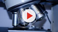 VIDEO - Tumori: scoperta la proteina che li fa crescere. Nuova via per la cura