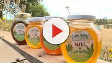 Video: Por qué la mezcla de cannabis y miel está creando controversia