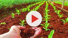 Importancia de la medición del pH del suelo y la solución de fertilizante