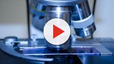 Scoperta la proteina Erk-2 che moltiplica le cellule tumorali