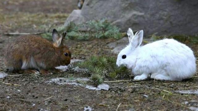 ¿Cómo afecta el clima al camuflaje de los animales? ¡Sorprendente!