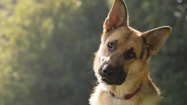 'Hablar con un perro' es importante para vincularse con su mascota