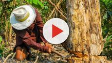 Archivos del Mas Allá: El Hachador Perdido