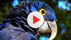 Las curiosidades del mundo animal
