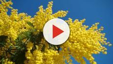 Festa delle donne, l'8 marzo non regalate mimose: ecco il regalo ideale