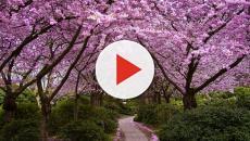 Los lugares más populares en los Estados Unidos para las vacaciones de primavera