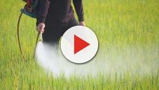 Fertilizantes ecológicos con la mejor relación calidad y precio