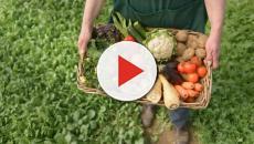 Hacia 2030 la contribución de la agricultura al bienestar y la alimentación