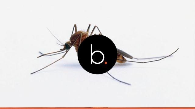 5 coisas incríveis que você não sabia sobre mosquitos