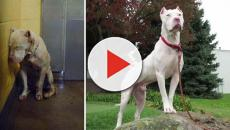 These before and after images of rescue dogs will melt your heart