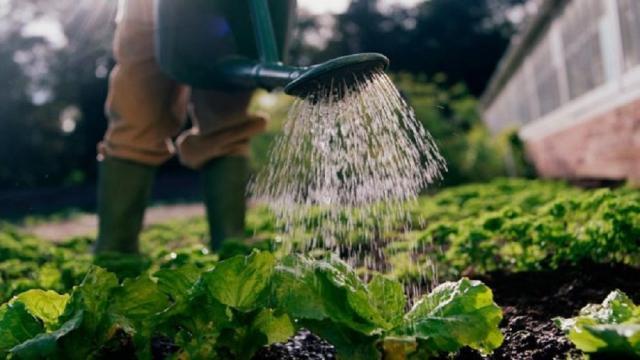 10 datos sobre el consumo de agua en la agricultura