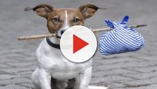 VIDEO: Hambre y abandono: la triste realidad de las mascotas en Venezuela