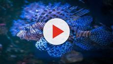 Tristeza por la muerte del niño que amaba los peces azules