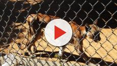 VIDEO: EL triste panorama de los zoologicos en Venezuela