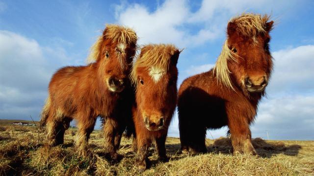 Si tus hijos ven estos lindos caballos miniatura, estás en problemas