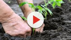 ¿Se debe prevenir el trasplantes de plantas vegetales?