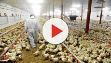 Nuevas tecnologías en la avicultura