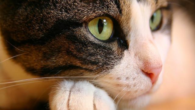 'Yoga con gatos' en oferta en el refugio de animales de Kettering, Ohio