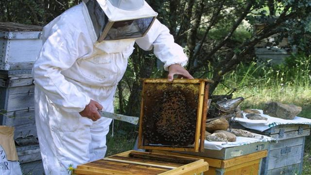 La disminución del número de apicultores y colmenas en Croacia