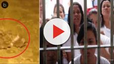 Situação crítica em penitenciária brasileira; detentas convivem com muitos ratos