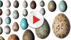 ¿Por qué cada especie de ave tiene diferentes huevos?